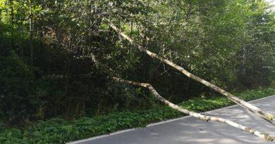 Strażacy wezwani do złamanego drzewa