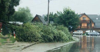 Szaflary. Złamany konar drzewa na przystanku