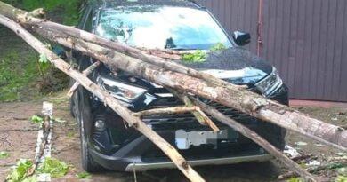 Zwalone drzewo spadło na samochód
