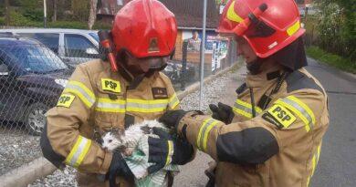 Nietypowa akcja strażaków – kotek uratowany