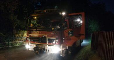 Strażacy usunęli gniazdo szerszeni